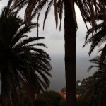 Palma na Lazurowym Wybrzeżu - dokładnie w Théoule sur Mer - zdjęcie zrobione przez Nanel4