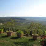 Pola owoców do produkcji szampana we Francji by ltdan