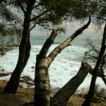 Drzewa zaraz przy morzu - Lazurowe Wybrzeże - by [phil h]