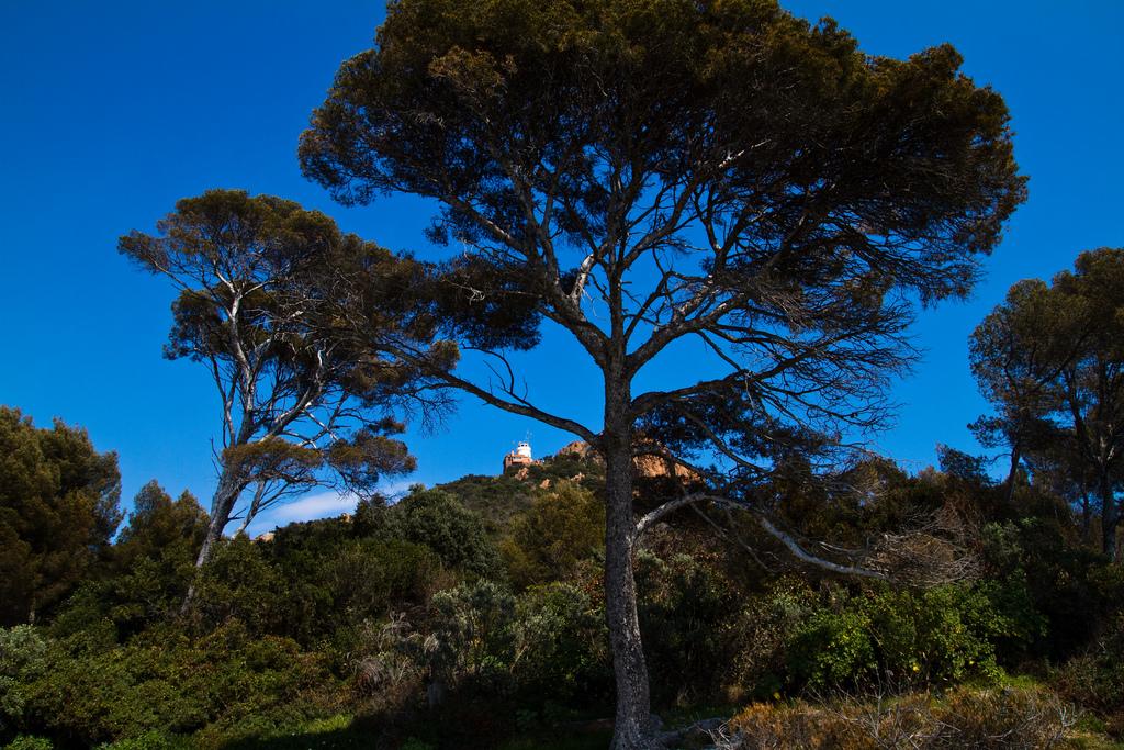Roślinność - drzewa - Lazurowego Wybrzeża - by Photos de Daniel
