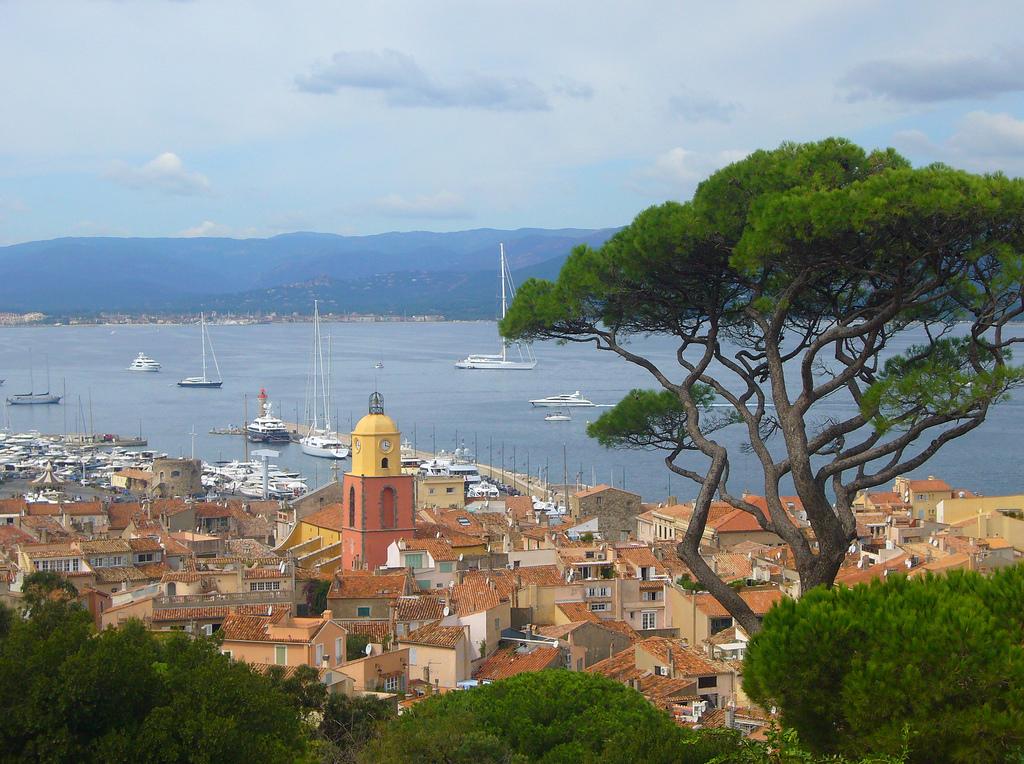 Dąb śródziemnomorski - w tle Saint Tropez we Francji - by Drost advies & creatie  Ben Drost