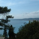 Drzewa w Nicei - by justinknabb