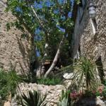 Drzewa w wiosce Eze - by ecololo