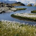 Kwiaty w Parku Nardowym Vanoise - by Marco Esteban Perez