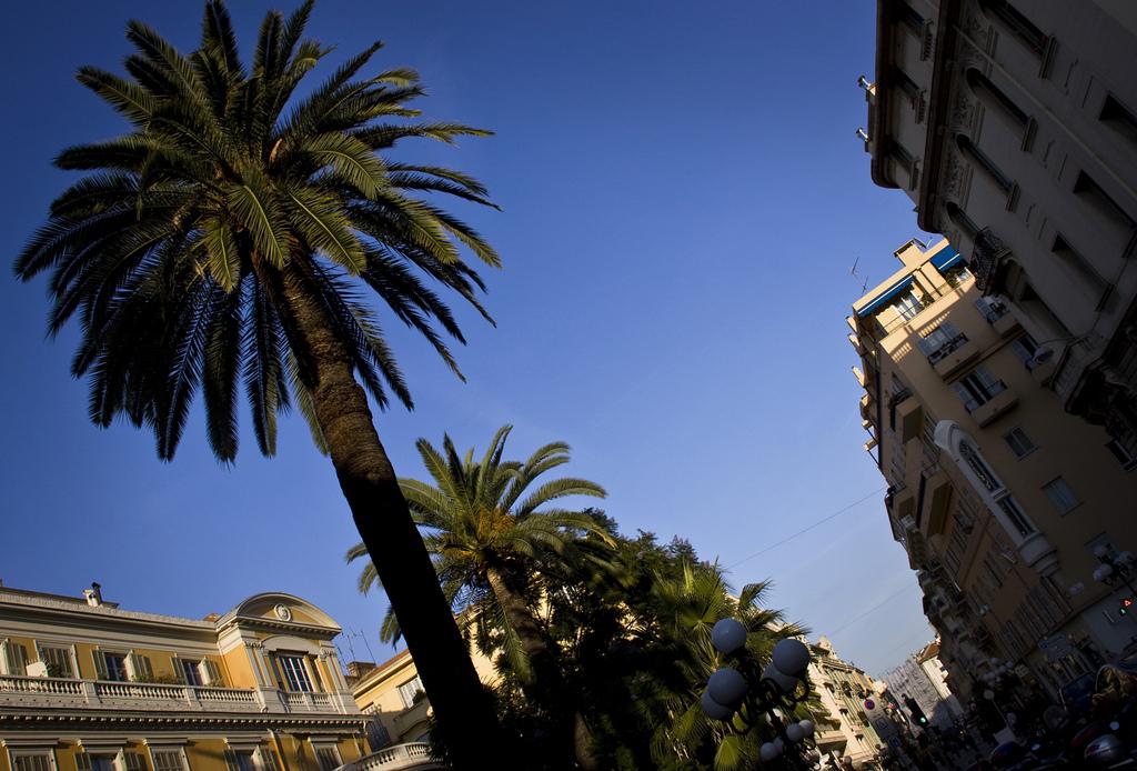 Palmy na ulicy w Nicei - by le calmar