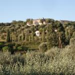 Roślinnośc w Grasse na południu Francji - by Bayfan