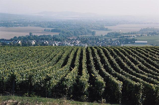 Szampania - Francji - by Gin Fizz