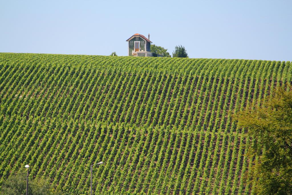 Wzgórza winogron - Szampania - Francja - by rhodeson