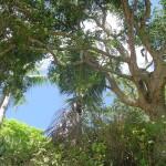 Mayotte, Petite Terre - by mwanasimba
