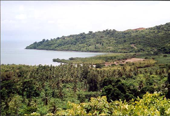 Mojotta Roślinność wyspy