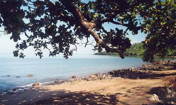 Mojotta na brzegu wyspy